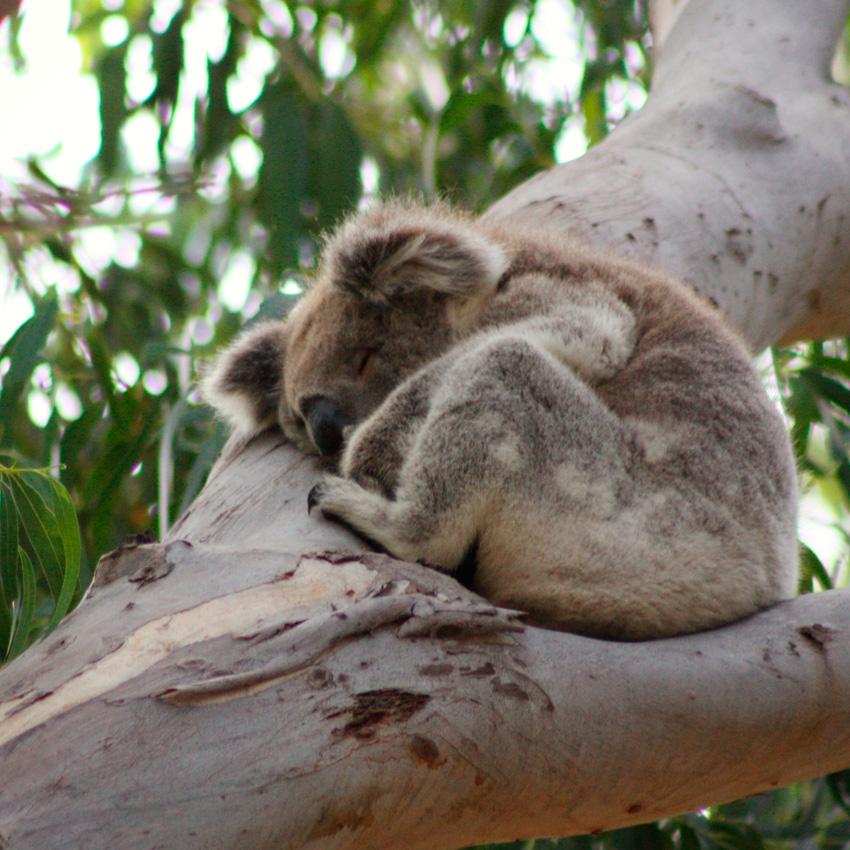 Into the wild: A Guide to Kangaroo Island [Photo: ©Eric Cowez]