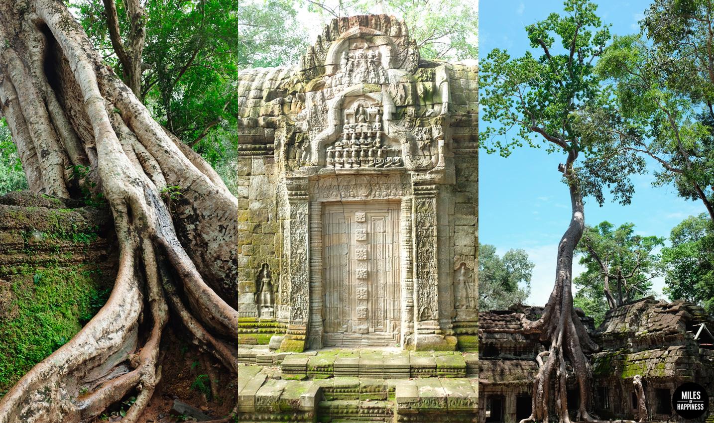 Itinerary of a 4 days trip in Cambodia : Ta Prohm