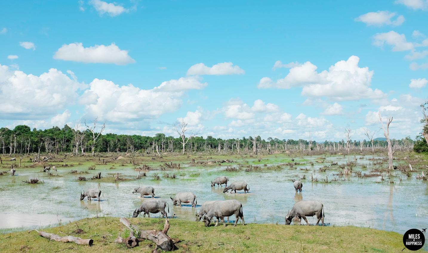 Itinerary of a 4 days trip in Cambodia : Neak Pean