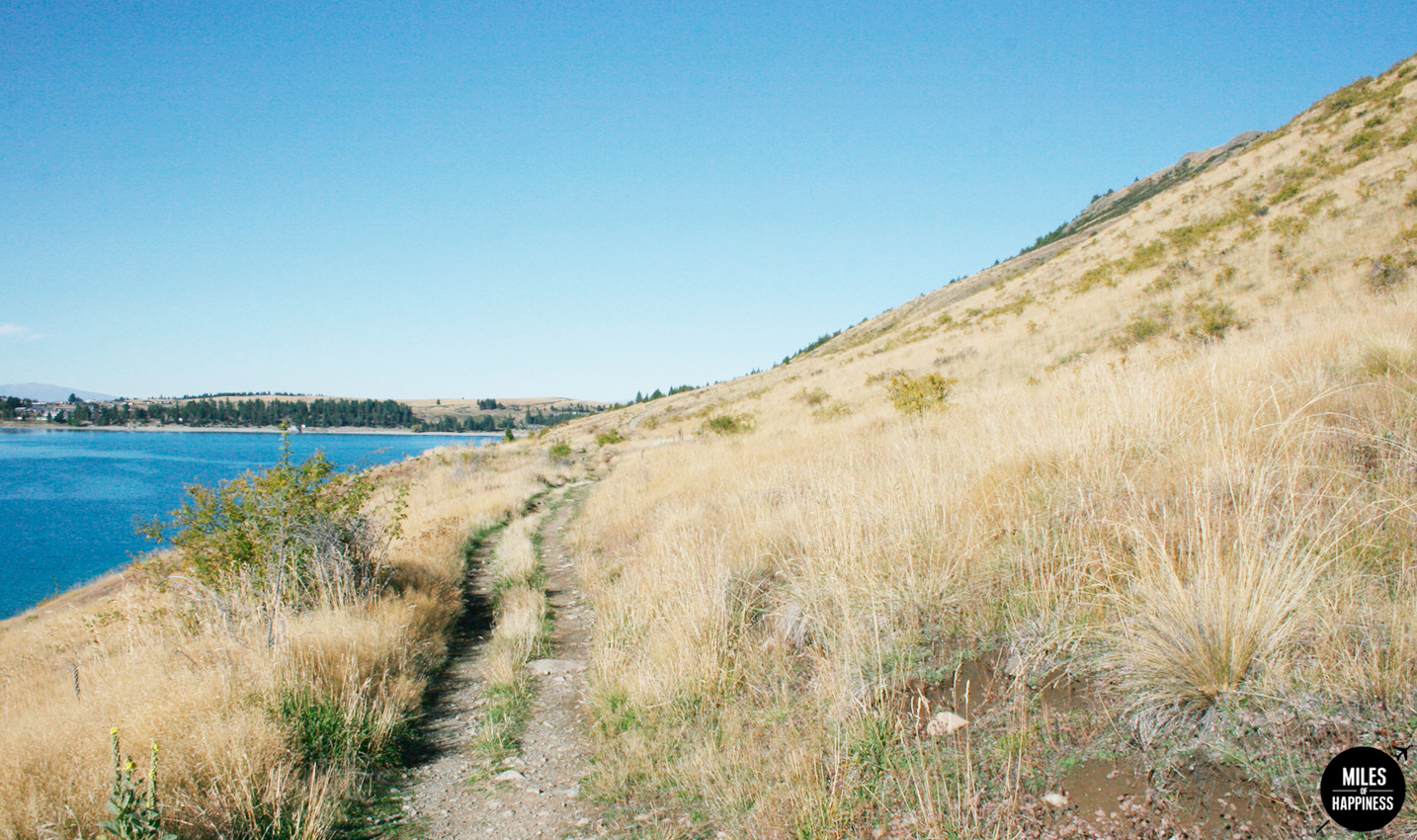 Lake Tekapo & Mt Cook : Story of a Perfect Day in New Zealand
