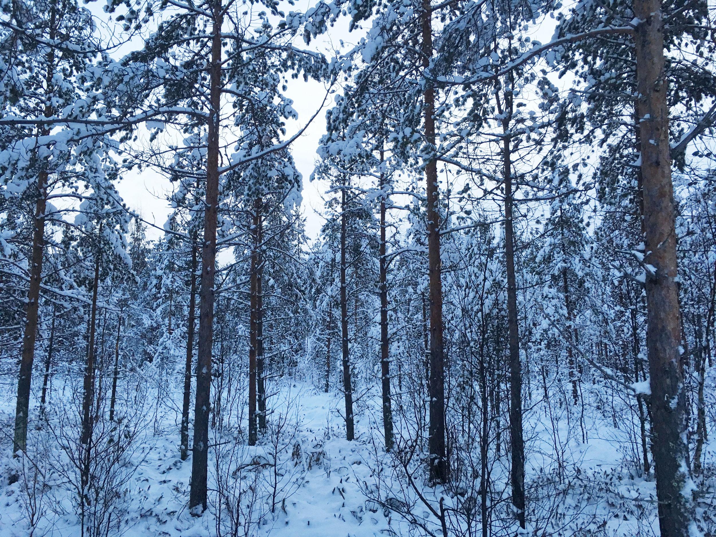 discover Finland - helsinki, rovaniemi &, lapland