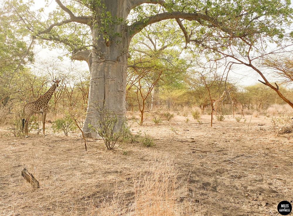 S'installer en Afrique : les choses à savoir