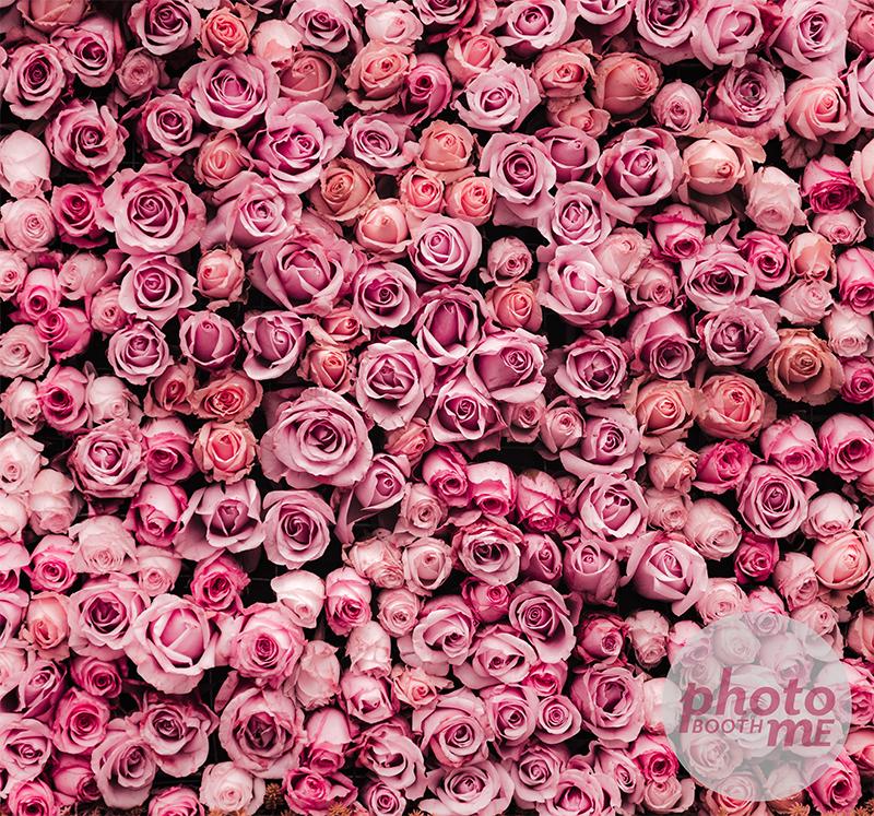 Pink Rose Fabric