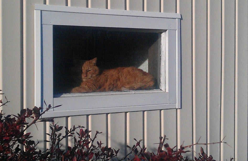 Cats like Trouble enjoy sunning themselves and watching what's going on outside.