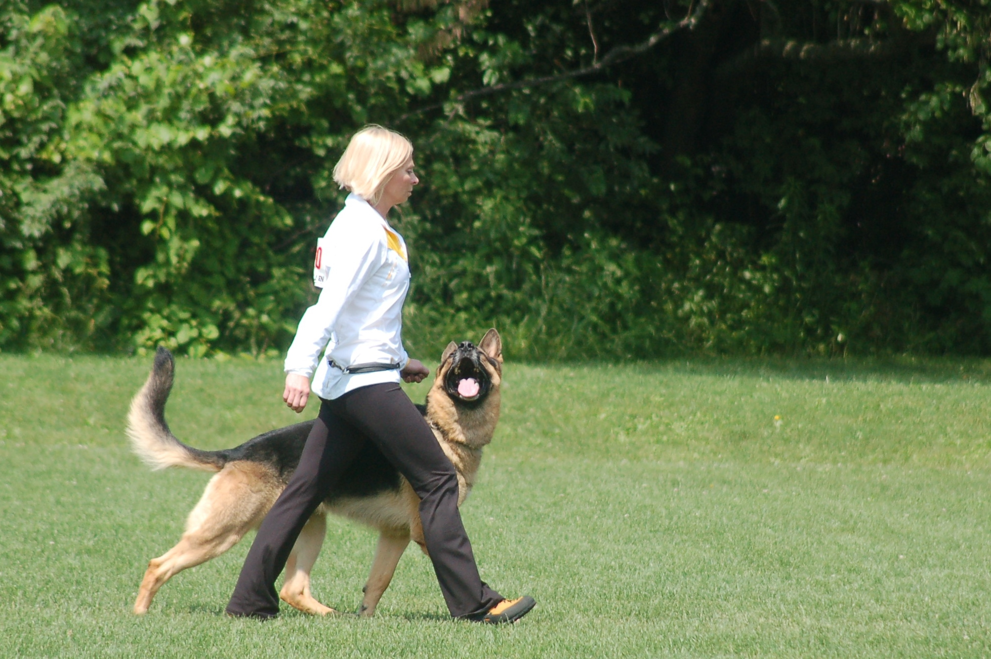 Formal heeling with attention for competition. Practical walking on a leash is recommended for everyday activities.