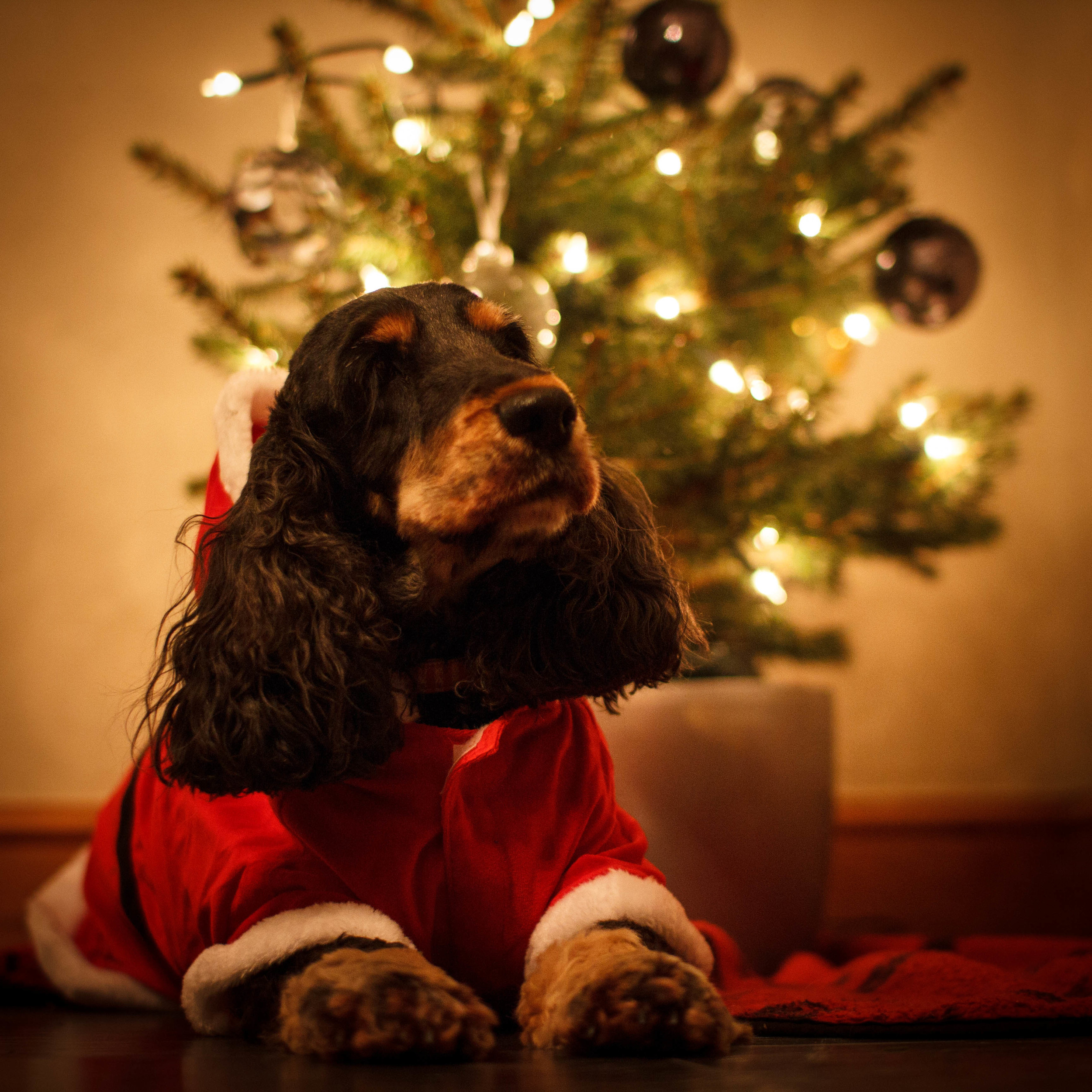 tailchaserschristmas.jpg