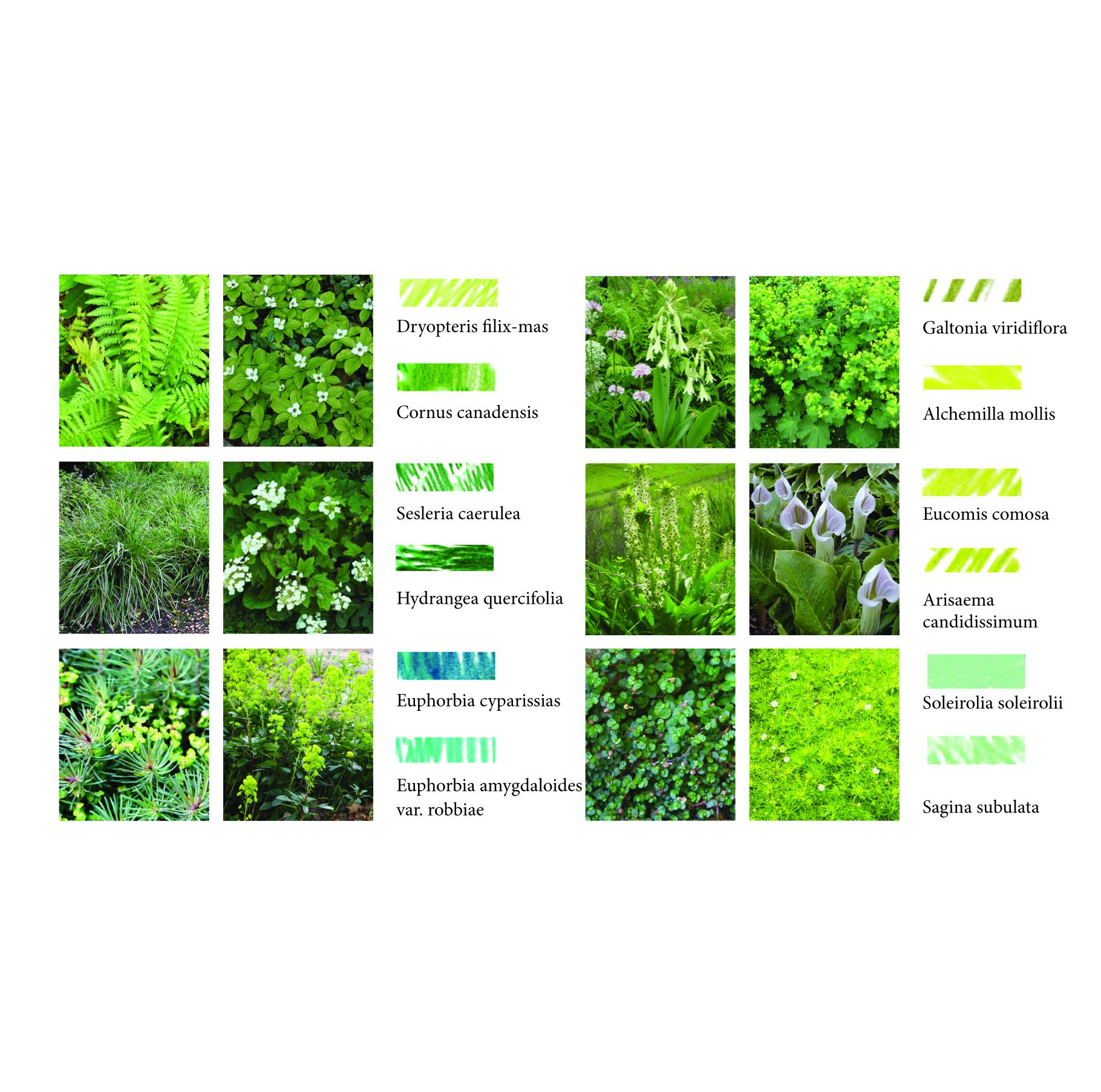 groundcover planting.jpg