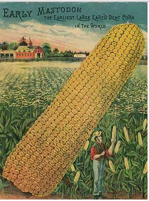 Photo from  Sustainable Seed Company .  Click to go to their website, check out the wisdom around growing and eating heritage seed corn.