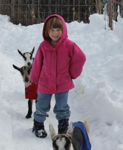 OK, so these goats ARE wandering in the snow... but, they are free wandering, pasture raised goats when the snow melts!
