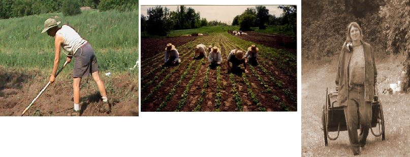 The farmers of  Birdsfoot Farm, Canton, NY  going about their daily tasks: moving, flexing, and strengthening their bodies all while creating something tangible... whole foods! Explore  Birdsfoot Farm's website  to see what they are up to  and  what they have to offer towards your healing plan!