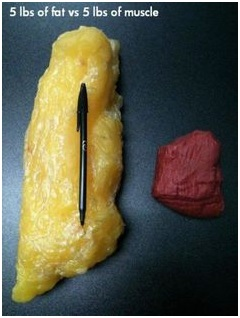 5 lb fat vs 5 lbs muscle.jpg