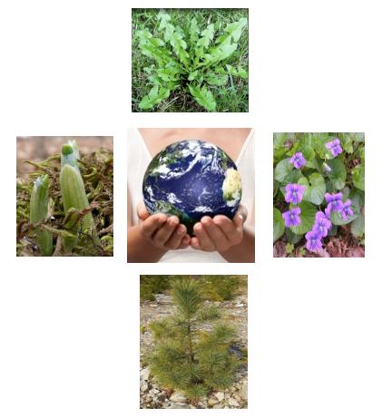 Clockwise from top:                         Dandelion greens, Wild Violet, White Pine, Wild Leek shoots.