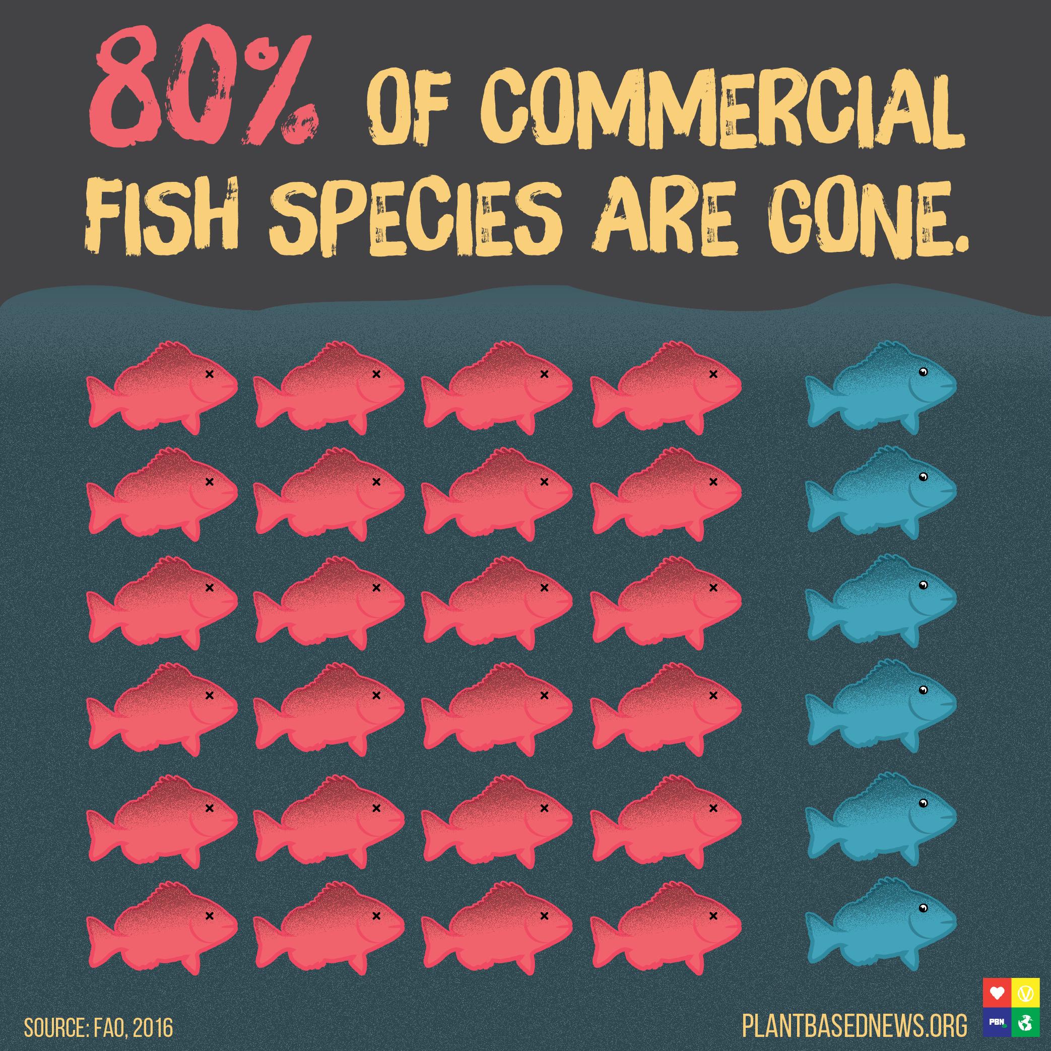 80 Percent Fish Square.jpg