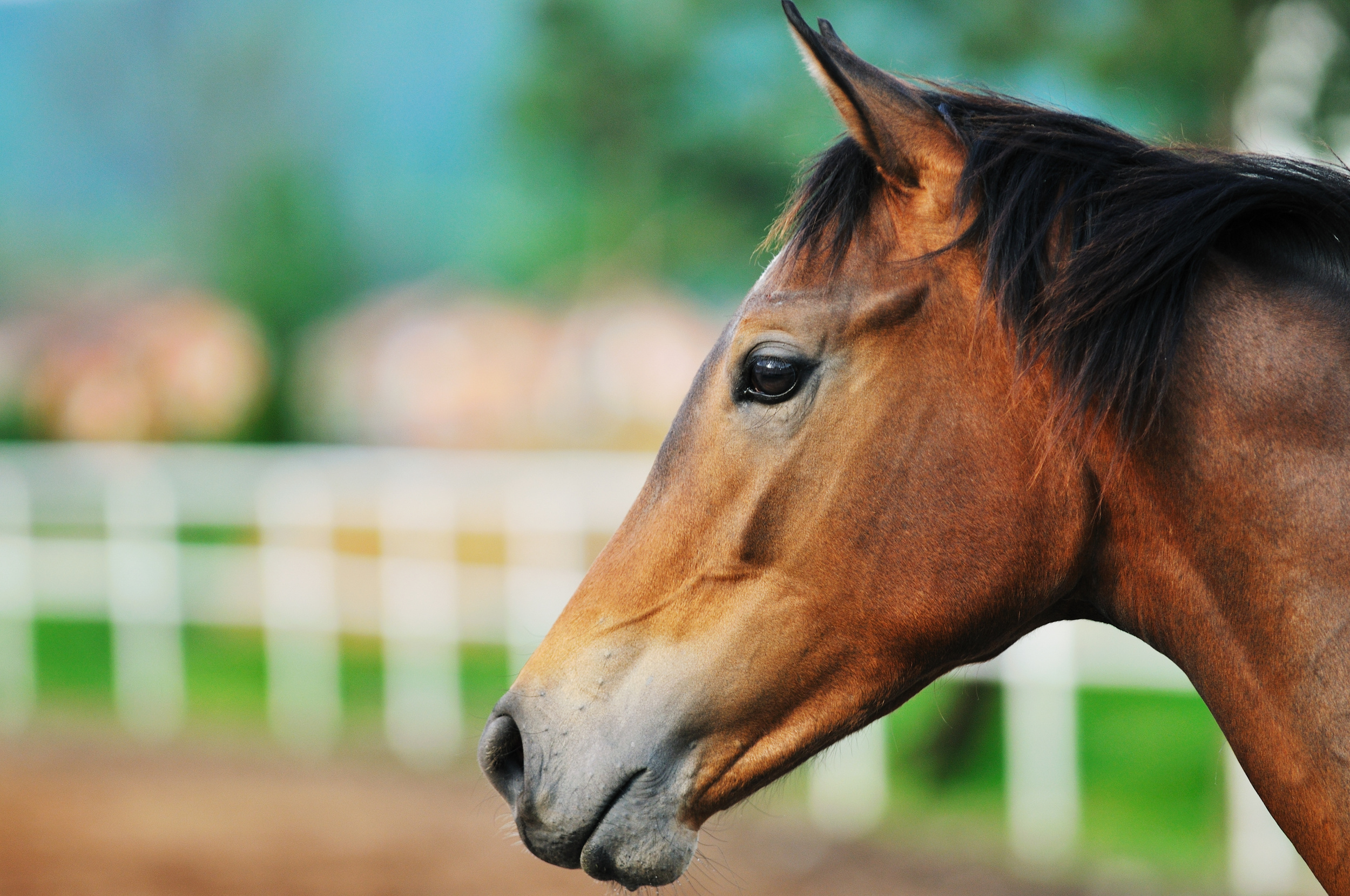 Key points for Weanling Sales Preparation