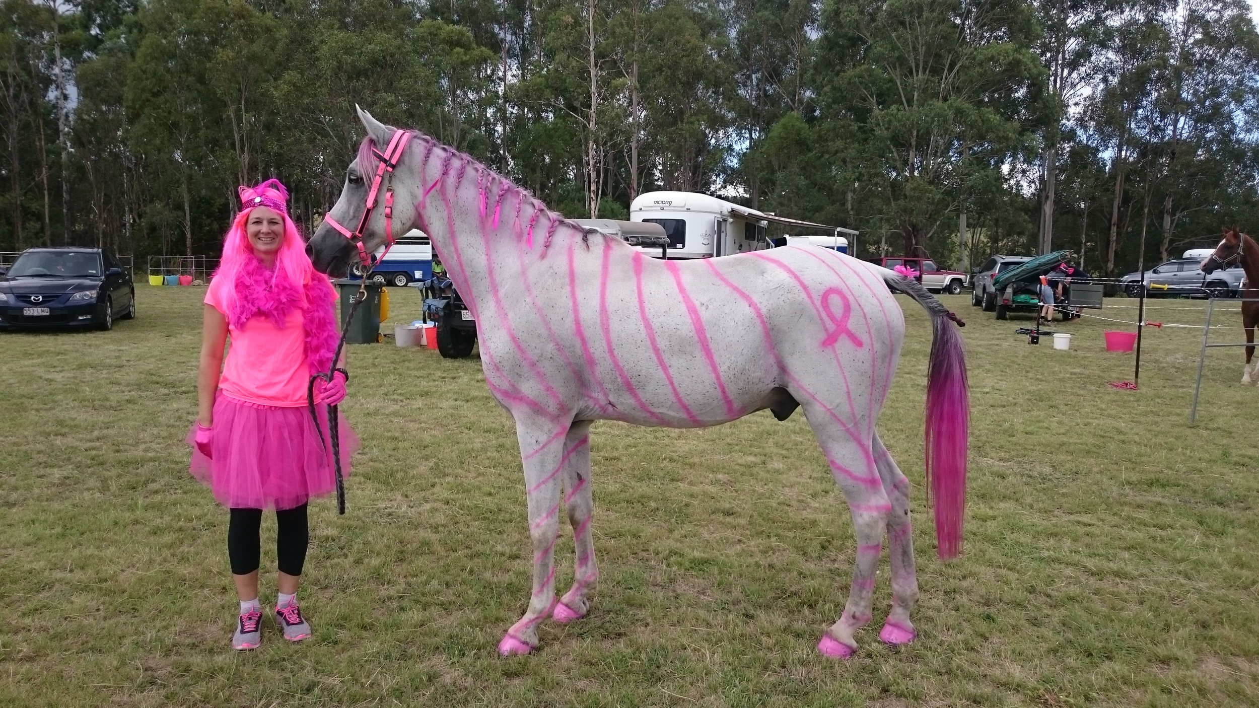 """El SAREM GLYDE - His previous owner passed away because of cancer and the family gave him to me, very special that he competed in the ride! Sabrina Stephens.         Normal   0           false   false   false     EN-AU   ZH-TW   AR-SA                                                                                                                                                                                                                                                                                                                                                                                                                                                                                                                                                                                                                                                                                                                                                                                                                                                                     /* Style Definitions */  table.MsoNormalTable {mso-style-name:""""Table Normal""""; mso-tstyle-rowband-size:0; mso-tstyle-colband-size:0; mso-style-noshow:yes; mso-style-priority:99; mso-style-parent:""""""""; mso-padding-alt:0cm 5.4pt 0cm 5.4pt; mso-para-margin:0cm; mso-para-margin-bottom:.0001pt; mso-pagination:widow-orphan; font-size:11.0pt; font-family:""""Calibri"""",sans-serif; mso-ascii-font-family:Calibri; mso-ascii-theme-font:minor-latin; mso-hansi-font-family:Calibri; mso-hansi-theme-font:minor-latin;}"""