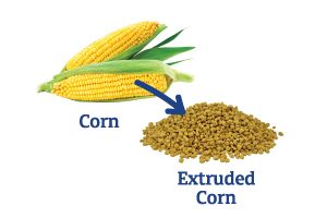 Corn-to-Extruded-Corn.png