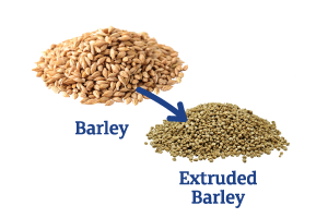 Barley-to-Extruded-Barley_Ingredient-pics-for-web.png