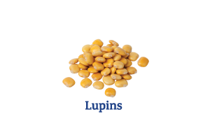 Lupins_Ingredient-pics-for-web.png