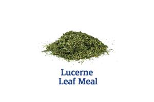 Lucerne-Leaf-Meal_Ingredient-pics-for-web.png
