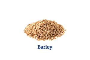 Barley_Ingredient-pics-for-web.png