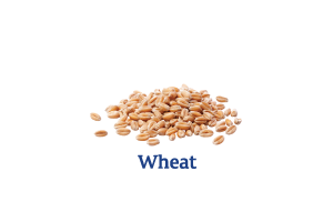 Wheat_Ingredient-pics-for-web.png