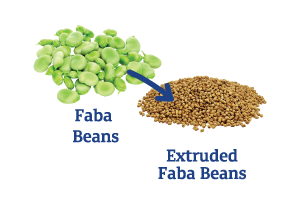 Faba-Beans-to-Extruded-Faba-Beans_Ingredient-pics-for-web.png