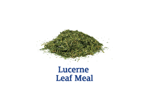 Lucerne-Leaf-Meal_Ingredient-pics-for-web.png