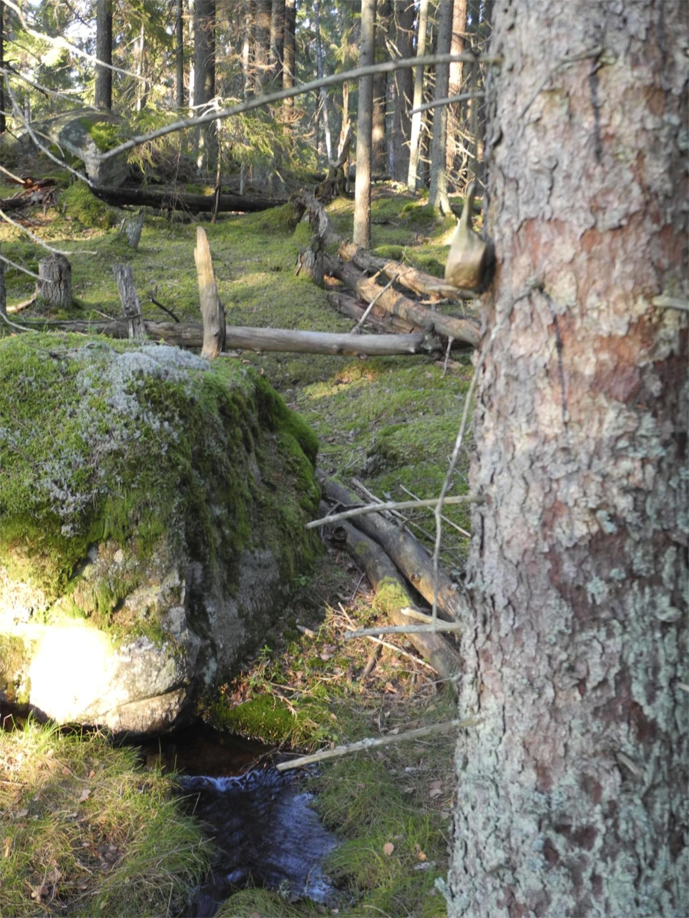 kallkälla vid Stensjön