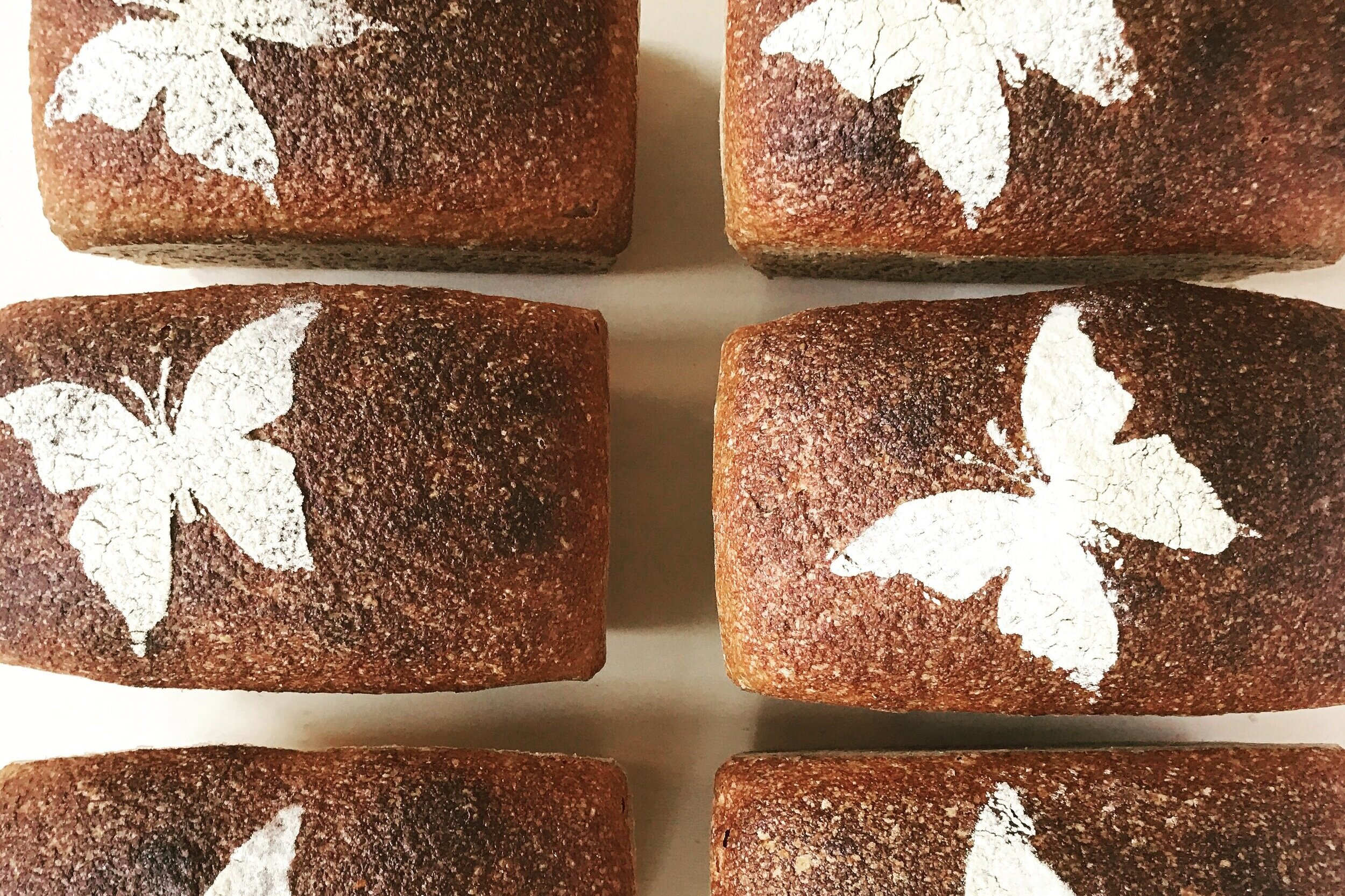 recipe for wholegrain sourdough with yq population wheat -