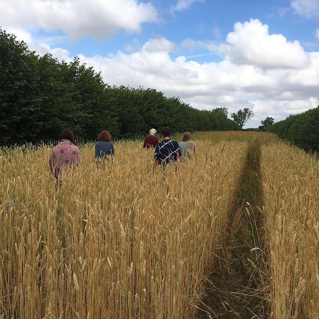 Team Small Food wandering off into the wheat with Martin