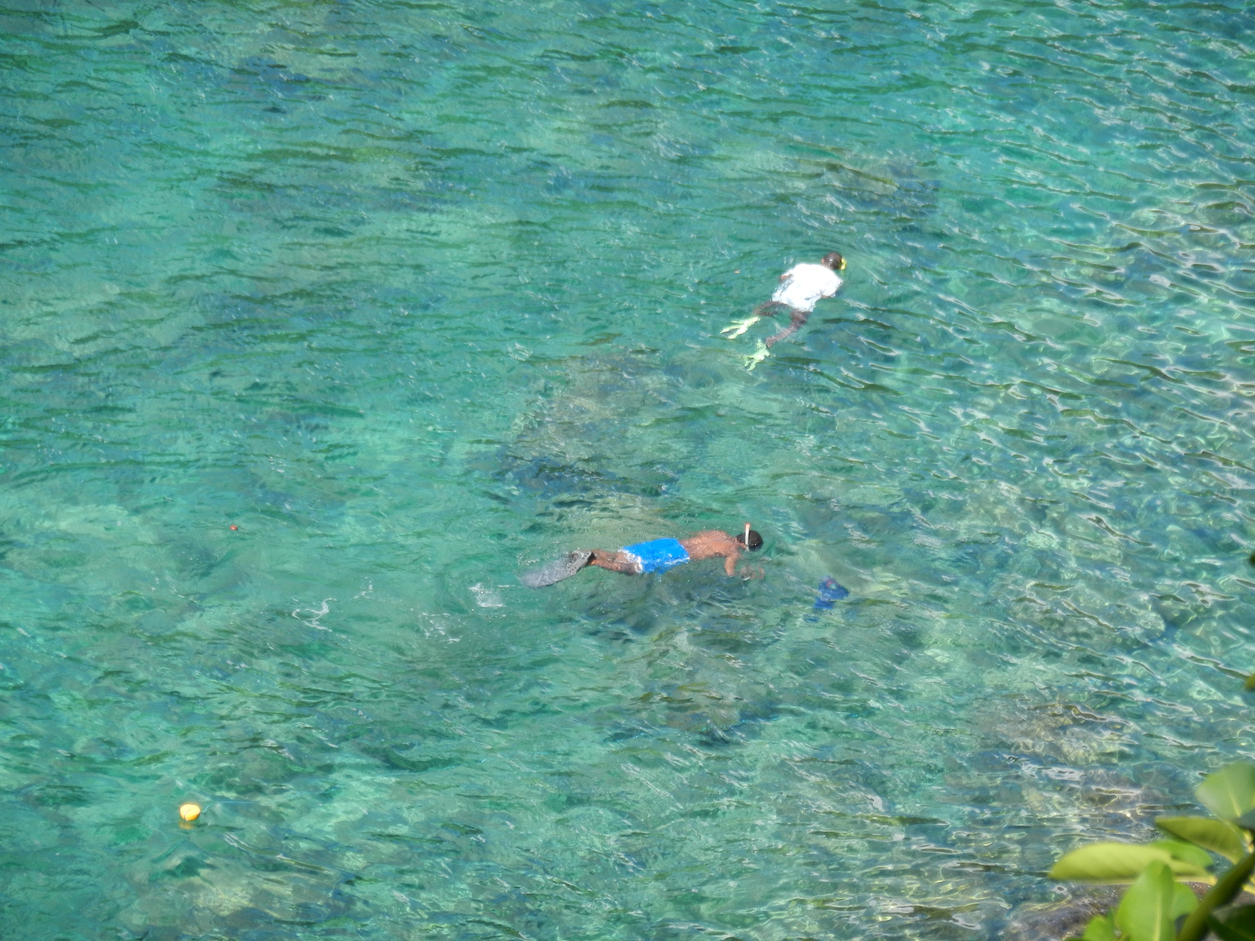 Snorkeling in the Bight