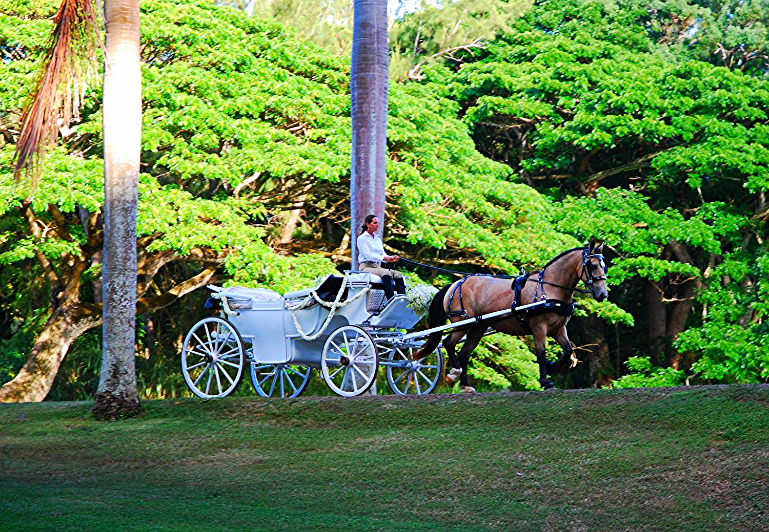 A horse and carriage is a Royal Hawaiian Tradition that can bring nobility and splendor like no other. ...                                    Enjoy your day in a manner befitting royalty.