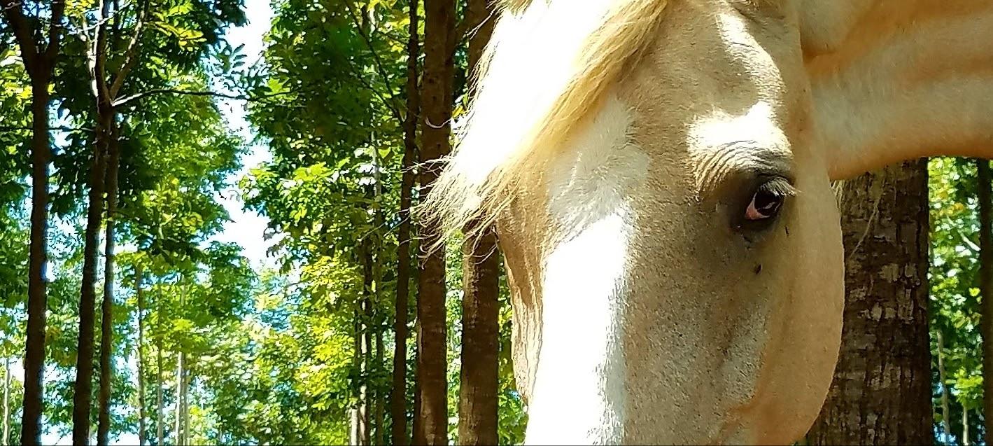 Sanctuary Horse Encounter -