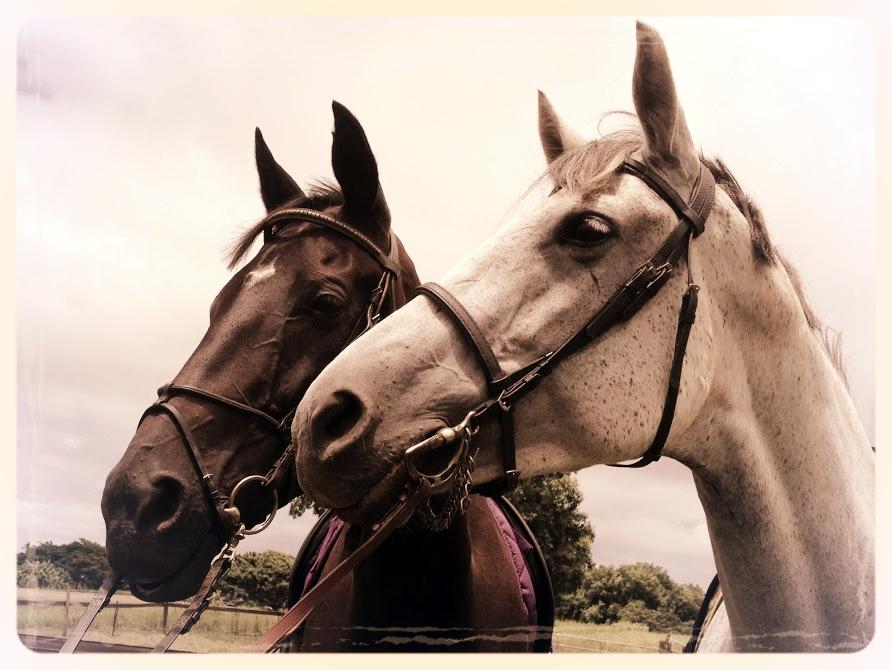 Classical Horsemanship -