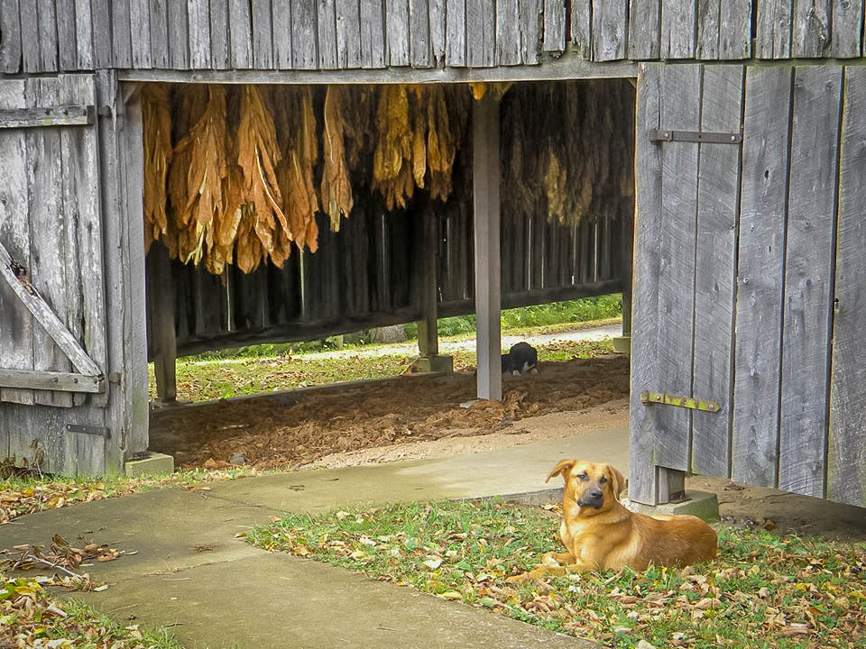 Tobacco Farm mm 401