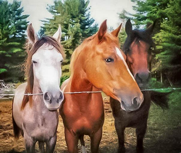 3 Horses in Virginia