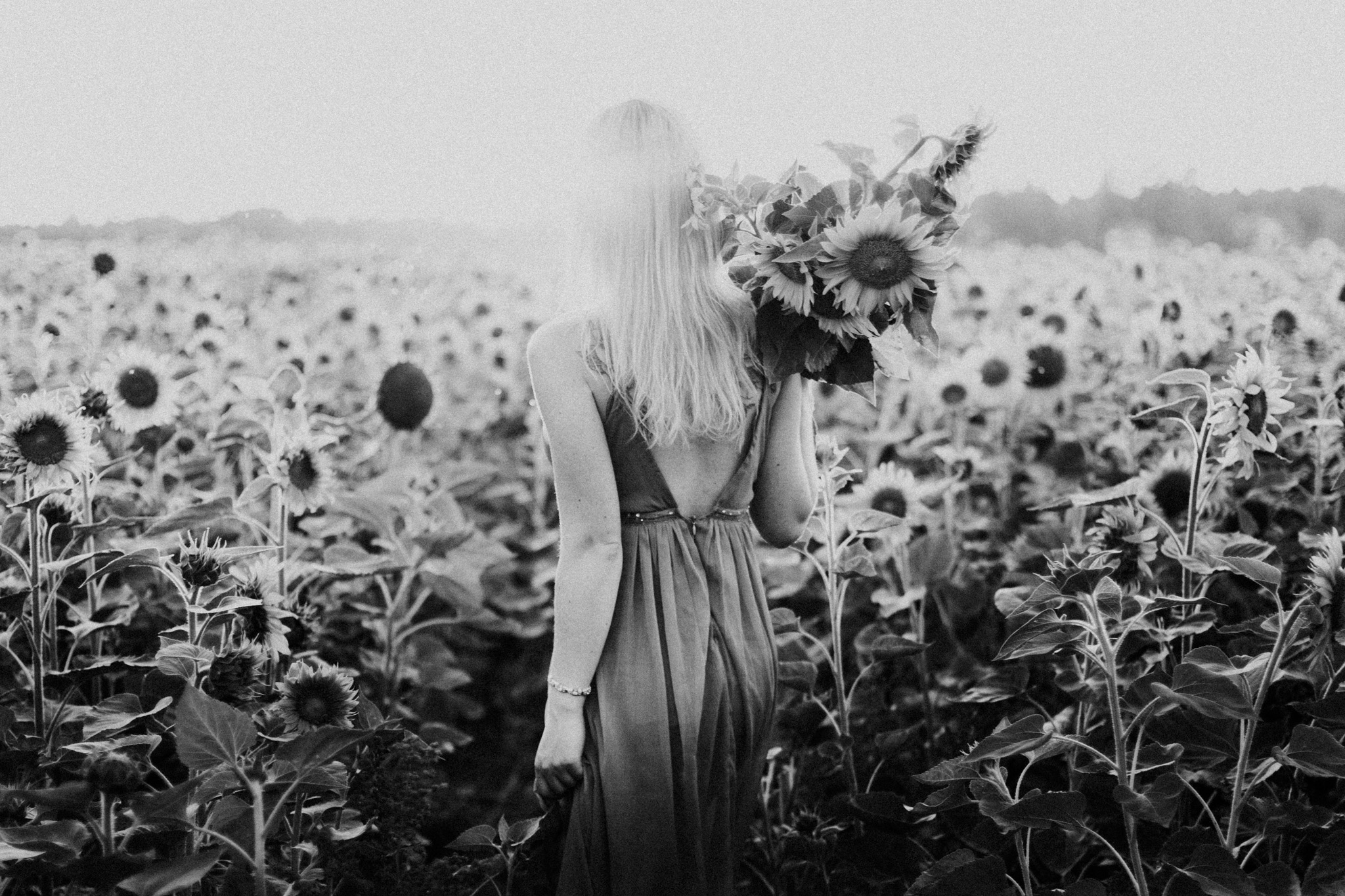 My_Sunflowers_web_bw-1065.jpg