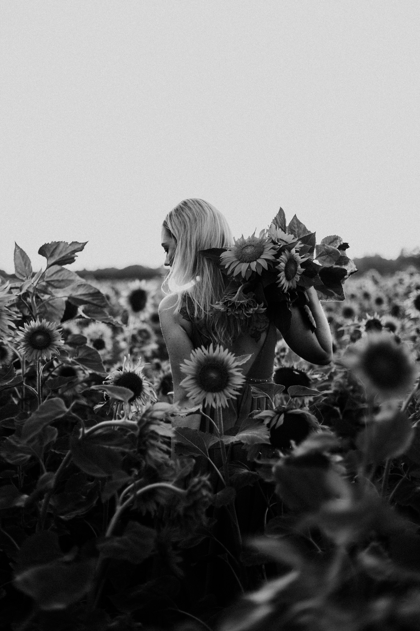 My_Sunflowers_web_bw-1081.jpg