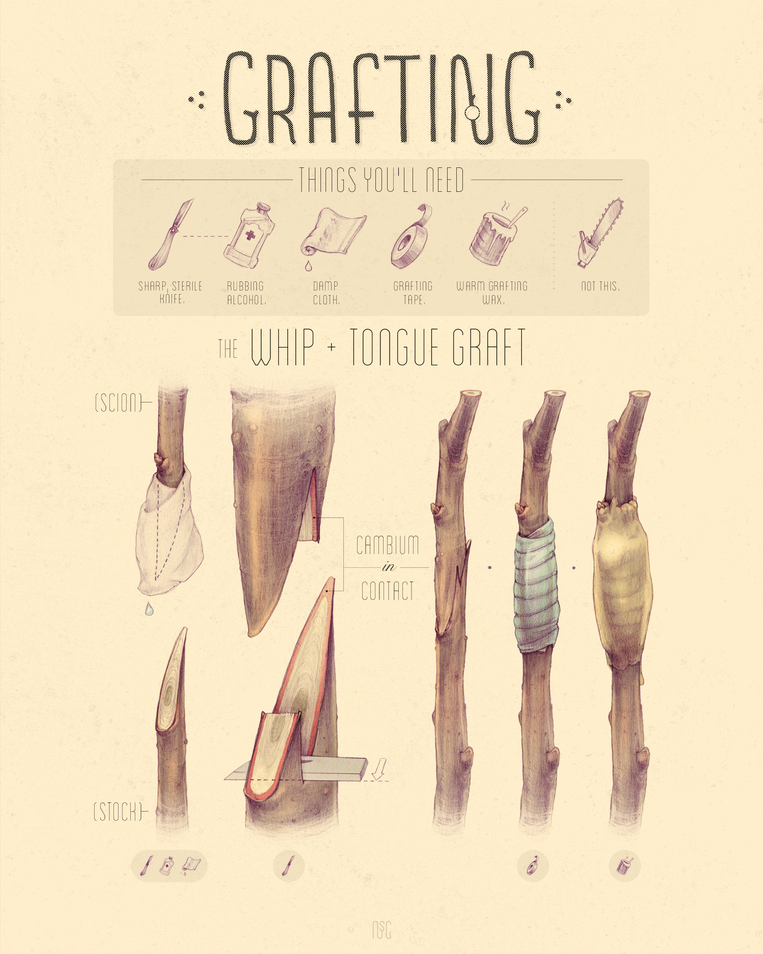 Copy of GRAFTING