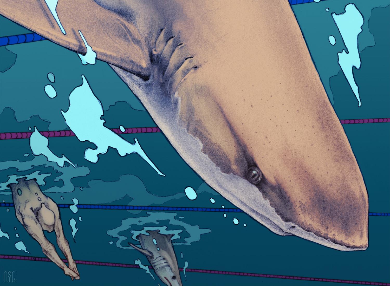 sharkracer_detail.jpg