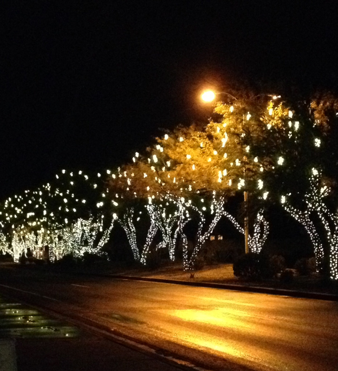 Christmas lights down Chandler blvd in Phoenix