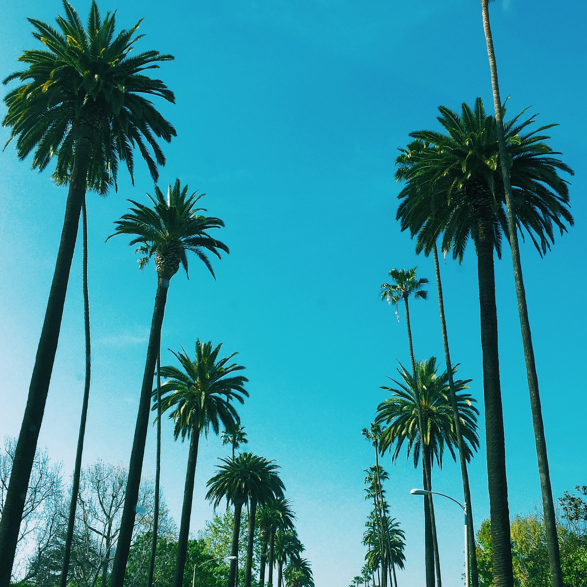 Visiting Beverly Hills