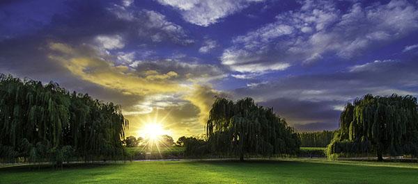Vineyard Estate Sunrise