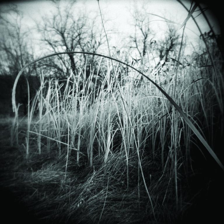 grass 2.jpg