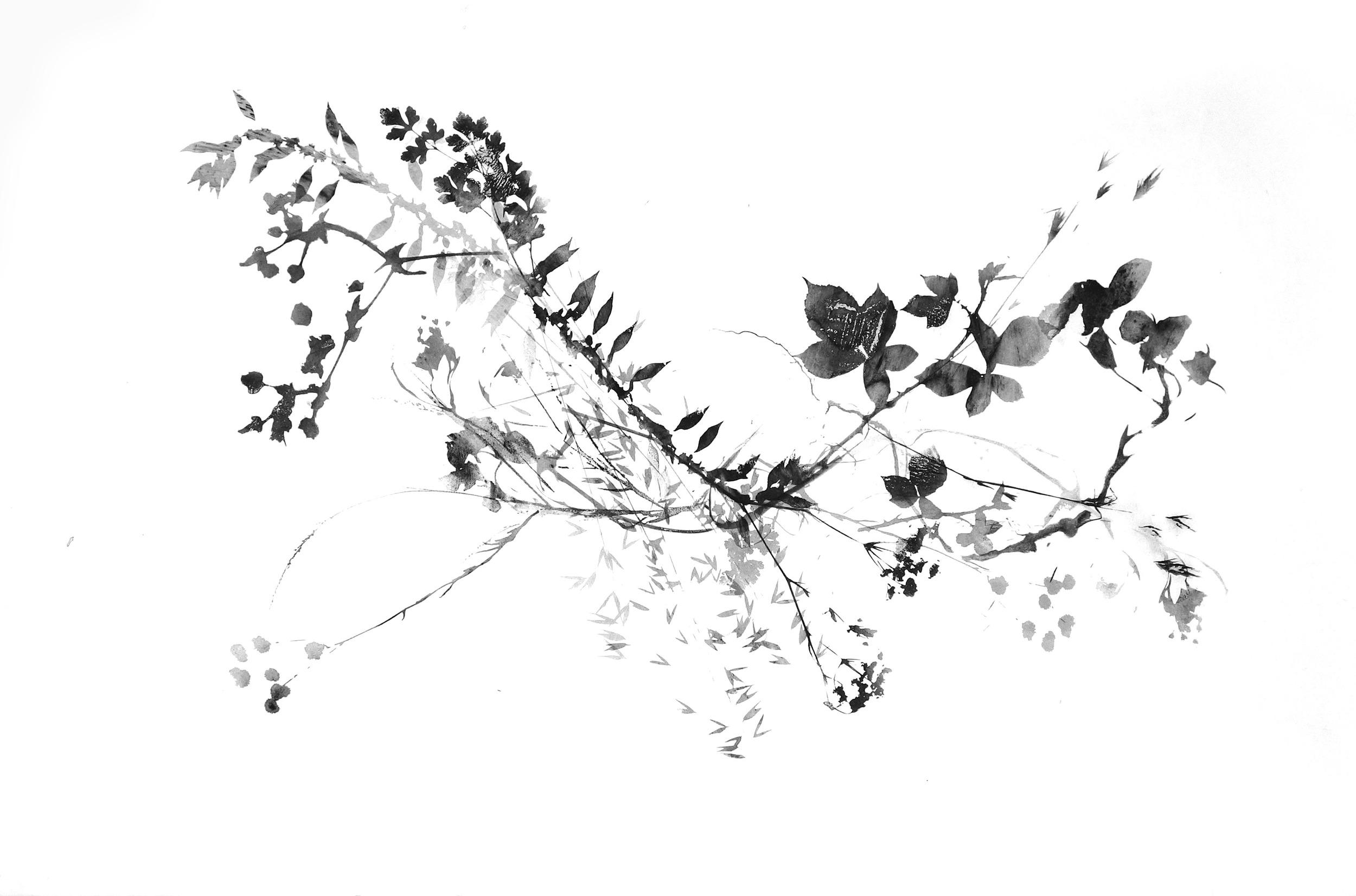 Bramble1_trim_web.jpg