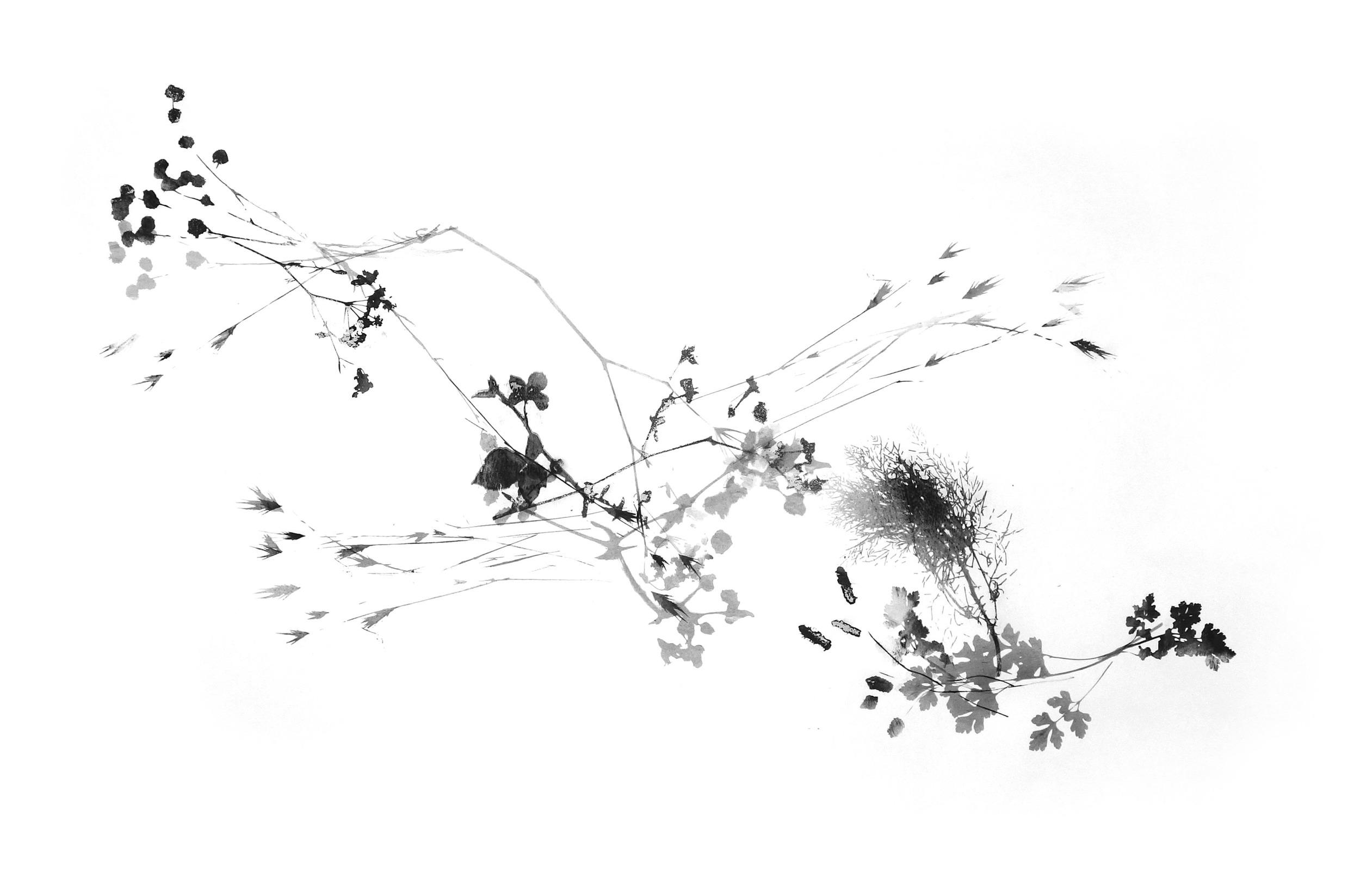 Bramble2_trim_web.jpg