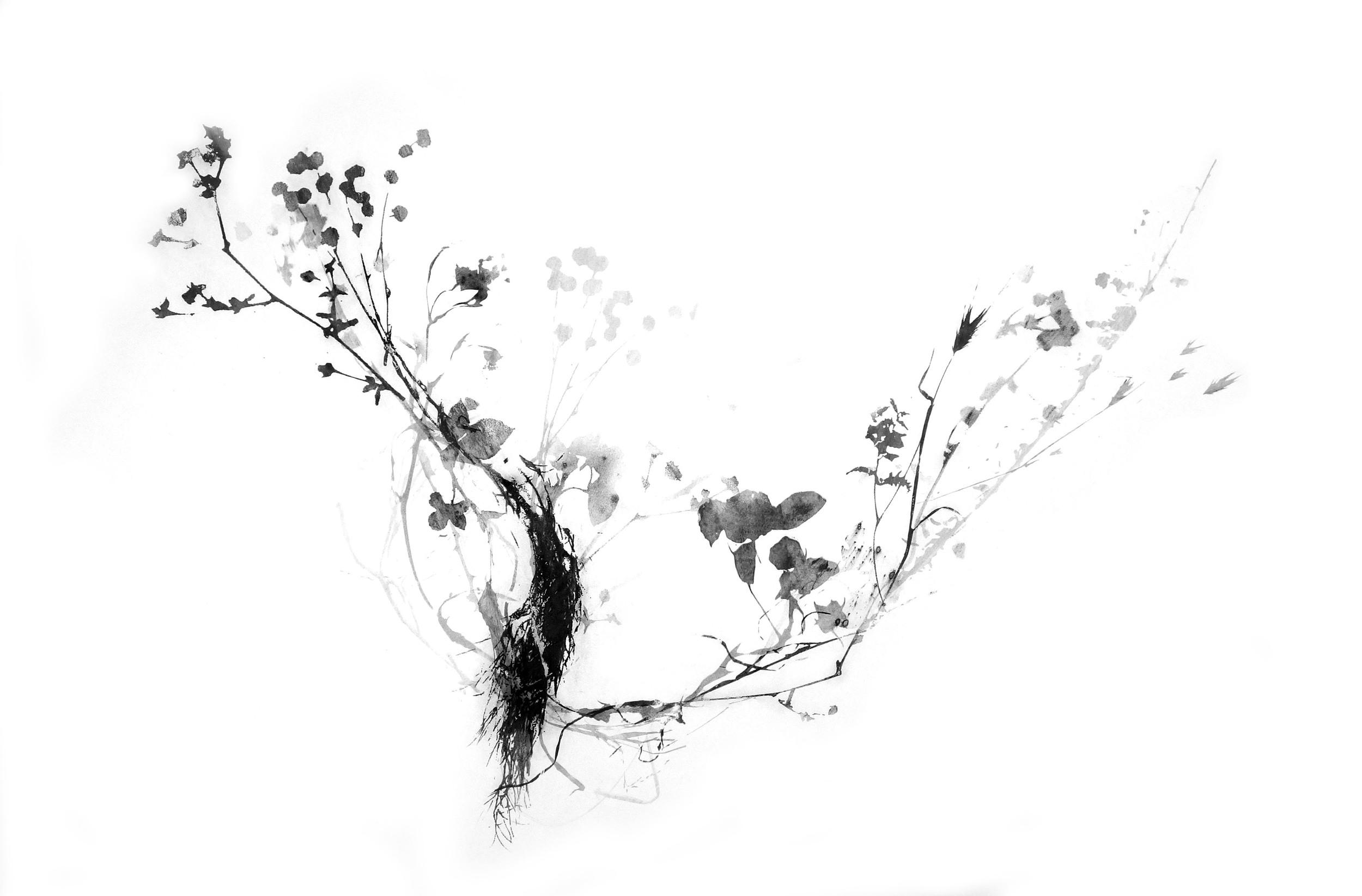 Bramble_4_crop_web.jpg
