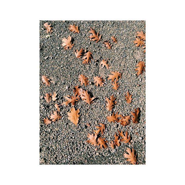 Our last autumn as a fam of 3 🍂 . . . #exploremore #mytinyatlas #inspiration #visualsoflife #thedailybite #flashesofdelight #capture #photodaily #thatsdarling #vsco #vscocam #wanderlust #autumn