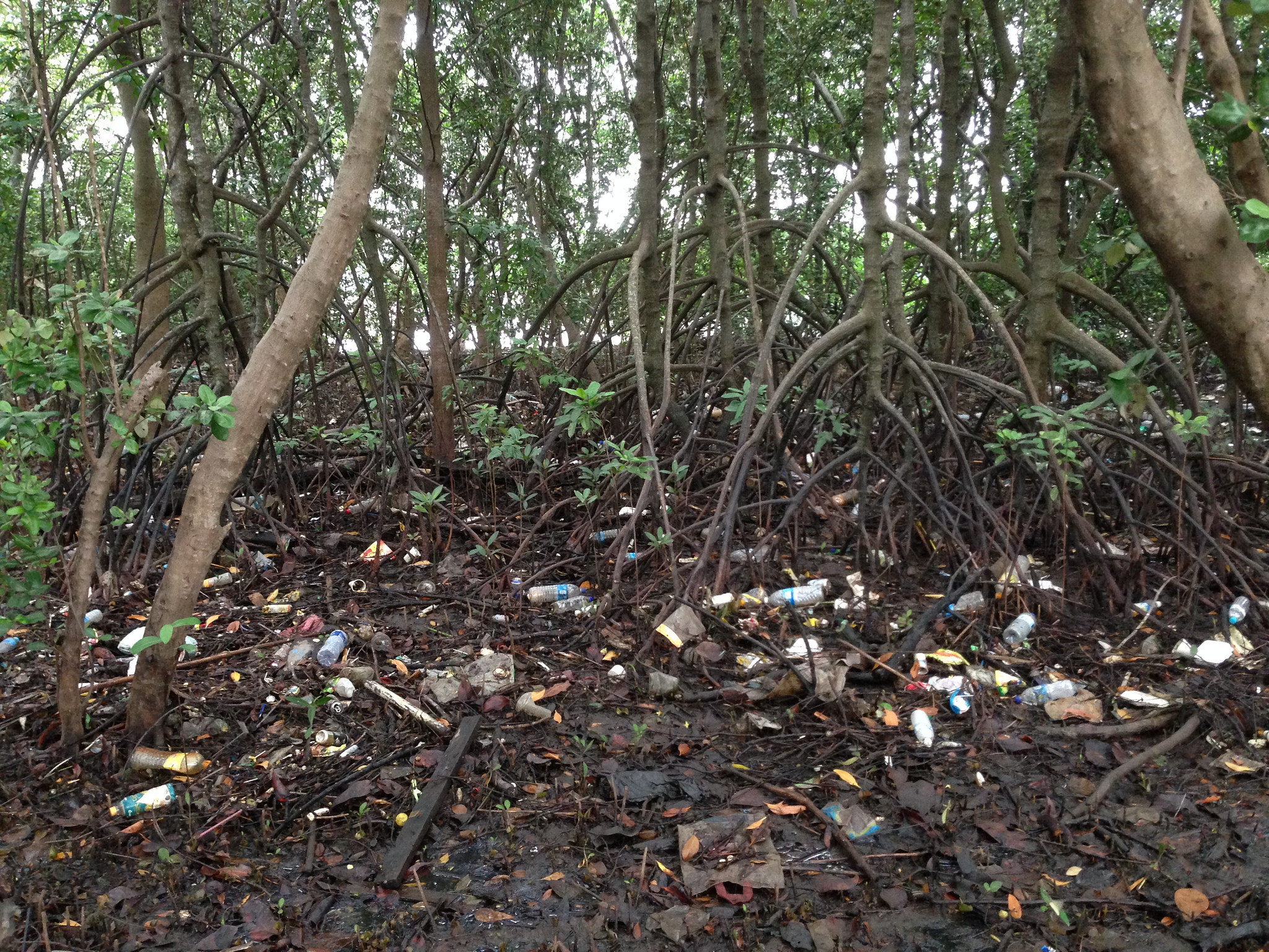Singapore - Pandan Mangrove - 2-pollution.jpg