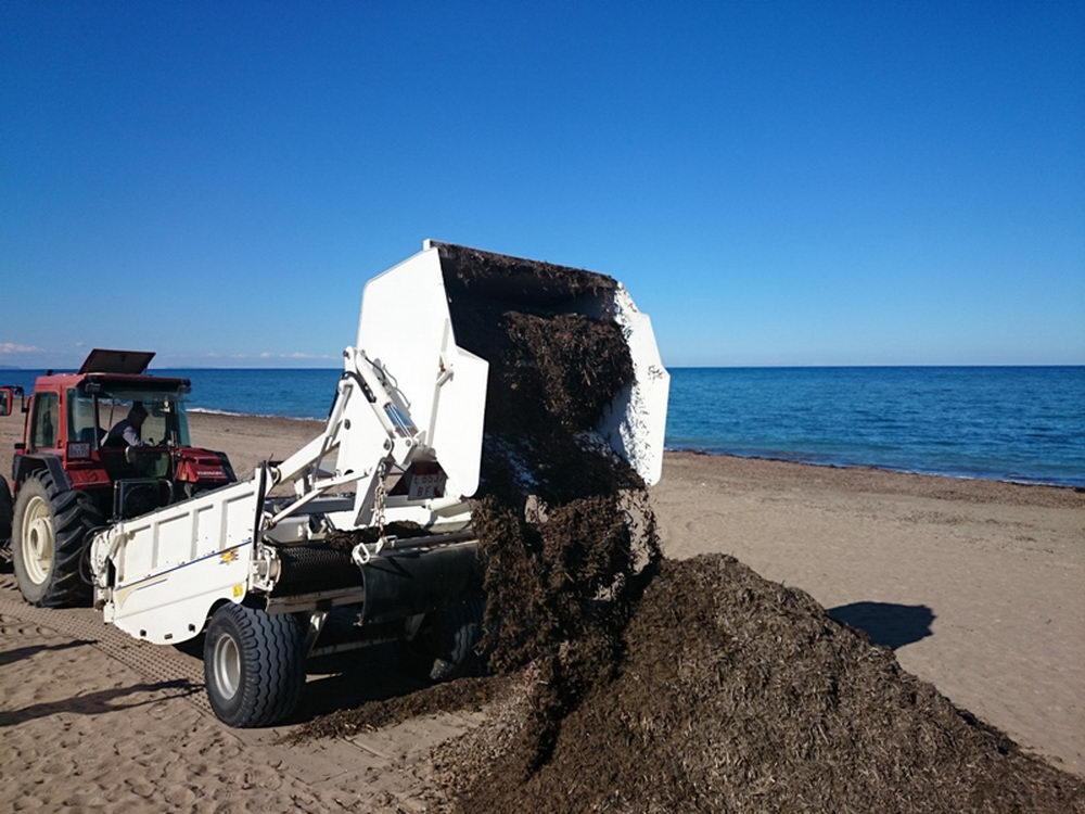 Sargassum-picking-up-clean-beach-machine-05.JPG